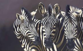Picture animals, strips, background, picture, art, muzzle, Zebra, Robina Yasmin