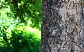 Wallpaper greens, summer, macro, nature, tree, bark