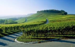 Wallpaper road, the vineyards, Germany
