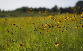 Picture grass, field, daisies