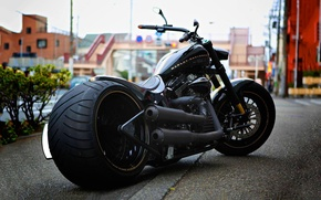 Picture motorcycle, Harley Davidson, bike, Harley-Davidson