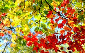 Picture autumn, the sky, leaves, branches, tree, the crimson