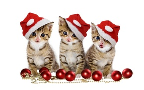 Picture christmas, magic, balls, hat, kitten, eyes, cat, beautiful, pretty, beauty, kitty, merry christmas, sweet, cats, ...