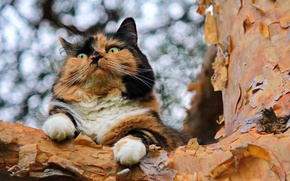 Picture cat, background, tree