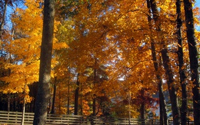 Picture Autumn, Trees, Fall, Autumn, Colors, Trees
