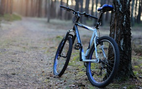 Picture forest, bike, tree, morning, track