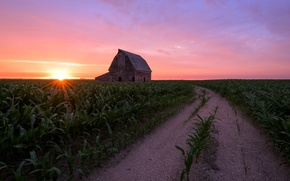 Picture road, field, house, corn