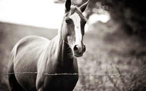 Picture horse, loyal, master, waiting for, Waiting you