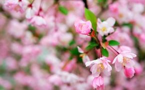 Picture flowers, macro, spring, flowering