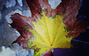 Picture Sheet, Autumn, Fall Wallpaper, hddraw