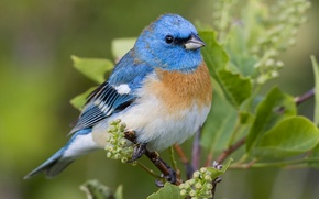Picture nature, sheet, bird, branch