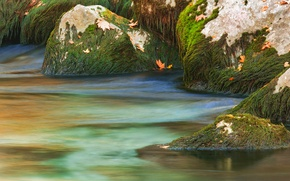 Picture autumn, leaves, water, algae, stones