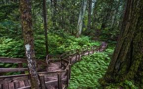 Picture road, forest, trees, rasteniya
