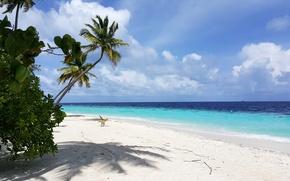 Picture beach, tropics, palm trees, beauty, white sand, island, Мaldives