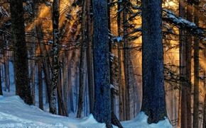 Picture winter, forest, light, trees, nature