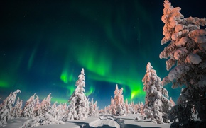 Picture winter, road, the sky, snow, trees, night, stars, Northern lights