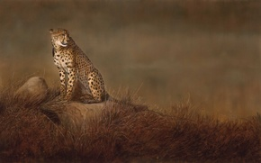 Picture cat, grass, stones, background, picture, art, Cheetah, Savannah, wild, Linda Schroeter