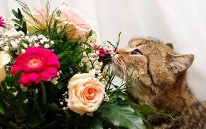 Picture flowers, bouquet, Kote