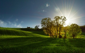 Picture field, the sun, rays, trees