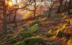 Picture autumn, forest, rays, trees, sunset, stones, England, slope, national Park, The Peak District