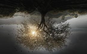 Picture cinema, sky, landscape, nature, tree, birds, movie, film, hope, vegetation, upside down, 2015, Divergent, sunbeam, …