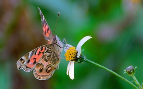 Picture flower, butterfly, wings, moth