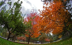 Picture trees, Park, colors, Autumn, trees, park, autumn, fall