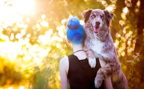 Picture face, girl, light, nature, pose, background, back, dog, positive, mistress, Sunny, shoulders, blue-eyed, keeps, bokeh, …