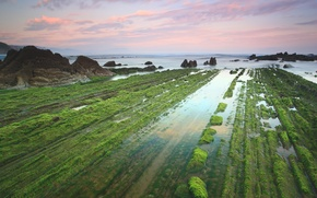 Picture sea, the sky, clouds, algae, stones, rocks
