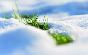 Picture grass, snow, spring