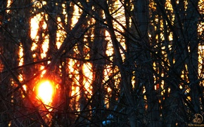 Picture forest, the sun, nature, forest, nature, sun