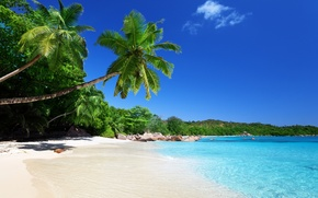 Picture sand, beach, tropics, stones, palm trees, coast
