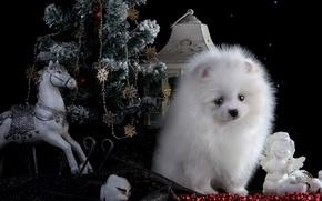 Picture white, horse, toys, new year, angel, lantern, puppy, tree, Spitz