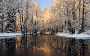 Picture winter, forest, snow, river