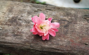Picture flower, grass, nature, tree, mood, pink, village, cloudy