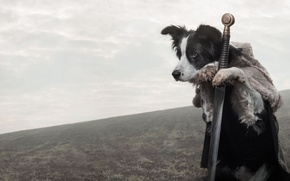 Picture look, each, dog, sword