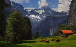 Picture summer, grass, trees, mountains, Alps, barn, cows