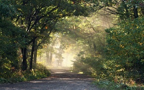 Picture road, forest, light, nature