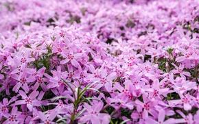 Picture macro, flowers, nature, pink, flower, nature, macro