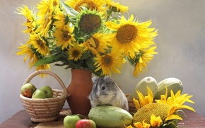 Picture sunflowers, apples, Guinea pig, vegetables, zucchini