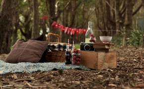 Picture forest, books, the camera, picnic, strawberries. Cola