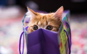 Picture look, package, Cat, red
