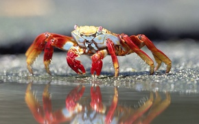 Picture water, reflection, crab