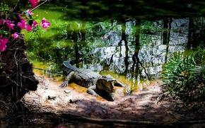 Picture Park, crocodile, Vietnam