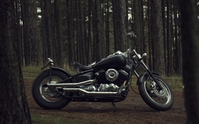 Picture trees, nature, design, motorcycle, bike