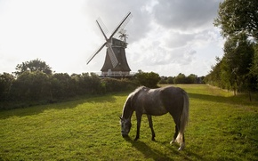 Picture grass, trees, nature, horse, mill