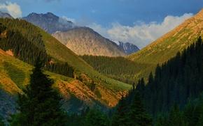 Wallpaper trees, mountains, gorge, Kyrgyzstan, Kyrgyzstan, Jety-Oguz