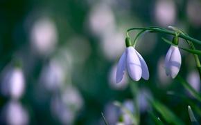 Wallpaper flower, macro, nature
