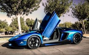Picture trees, blue, street, Lamborghini, blue, tree, street, aventador, Lamborghini, aventador