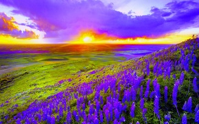 Picture the sky, clouds, flowers, valley, slope, glow